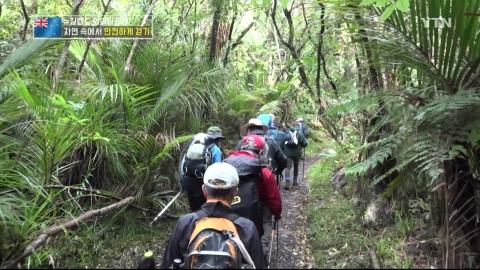 안전하게 걷는 '뉴질랜드 트레킹'