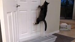 '주인이 닫으면 나는 연다'…문 따는 고양이