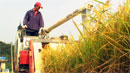 정부, 오늘 쌀 관세율 발표…513% 유력