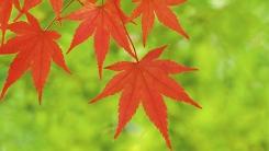 [인포뉴스] 가을 산행, 이것만 지켜주세요