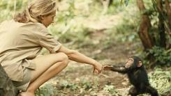'침팬지 어머니' 제인구달, 11월 한국 온다