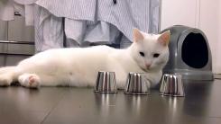 """'야바위' 하는 고양이…""""내 눈은 빠르다옹"""""""