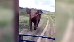 야생코끼리의 추격…'달리기 이렇게 빨랐나?'