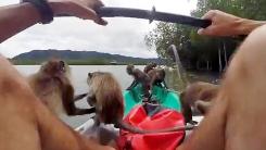 원숭이 무리의 습격…'어디서 나타난 거야?'