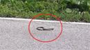 <font color=red>[제보영상]</font> 뱀 공격에 '펄쩍' 뛰는 개구리