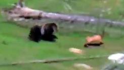 육중한 곰의 놀라운 스피드 '혼신의 추격전'