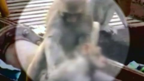 """사람 감동시킨 원숭이의 의리 """"죽으면 안돼"""""""