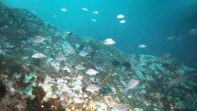 동해 바닷속 151종 해양생물 발견…보전 가치는?