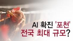 [한컷뉴스] 포천 AI 확진 '전국 달걀 10%가…'