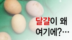 [한컷뉴스] 계란과 함께 멸균기에 넣어버린 개념