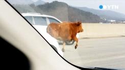[이 시각 제보영상] 고속도로를 달리는 소