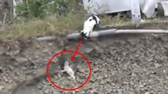 """낭떠러지 떨어진 아기 고양이 """"엄마가 구해줄게"""""""