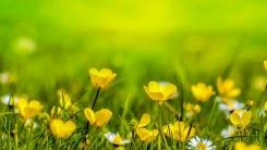 [한컷뉴스] 진짜 봄은 언제 시작될까?