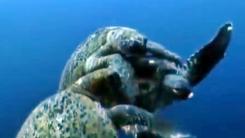 느릿느릿 거북이 싸움은 하드코어 '뜯고 할퀴고'