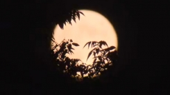 [한컷뉴스] 보름달 몇시에 어디가면 가장 잘 보일까?