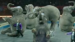 [한컷뉴스] 100년 전통 코끼리 서커스 역사속으로