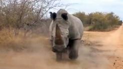 코뿔소의 슈퍼파워…무시무시한 '돌격 앞으로'