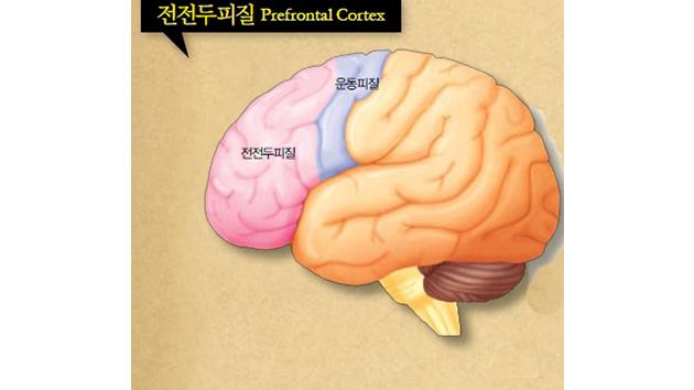 [뇌과학 칼럼] 살찌면 머리가 둔해진다? 뇌과학이 밝혔다!