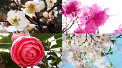 [영상] 전국 물들인 봄꽃의 향연