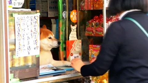 """""""무엇이 필요하세요? 제가 가게 주인입니다만"""""""