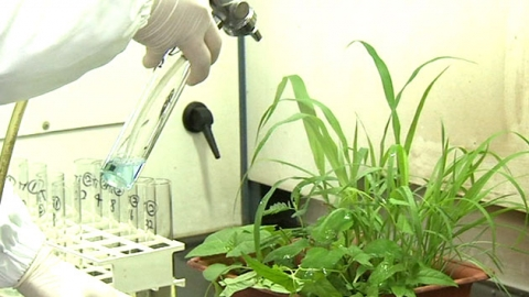 잡초만 모두 잡는 친환경 제초제 개발