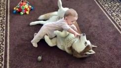 7개월 아기의 듬직한 애완동물 '인형보다 좋아'