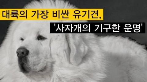 대륙의 가장 비싼 유기견 '사자개의 기구한 운명'