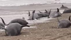 [한컷뉴스] 돌고래는 오늘 일어날 일을 '알고있었다'