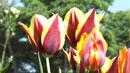 수목원의 꽃 축제…봄의 절정 즐겨요