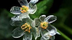 '물에 닿으면 투명해지는 꽃' 합성일까?