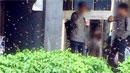 """""""여왕벌을 잡아라!""""…캠퍼스 벌떼 소동"""
