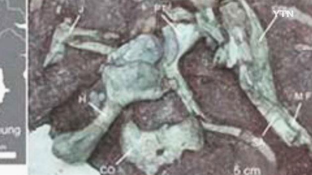 8천백만 년 전에 살았던 '거대 도마뱀' 화석 입증