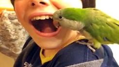 앵무새 치과의사 '흔들리는 이는 내게 맡겨'