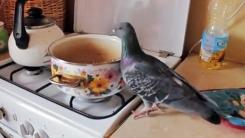 """비둘기의 무단 가택침입…""""이래서 '닭둘기'구나"""""""