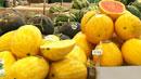 노란색·까만색…나도 수박이랍니다!