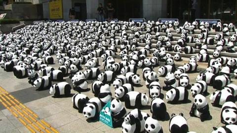 서울에 상륙한 판다…야생동물 보호 프로젝트