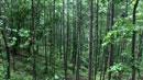 수도권 자연 휴양림 인기