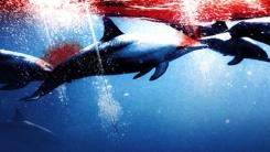 [한컷뉴스] 학살일까 전통일까? 돌고래 사냥 '백기' 든 일본