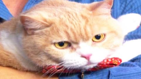 """광고 찍고 기부까지…""""나는 스타 고양이다옹"""""""