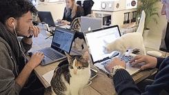 '야옹이 과장님 결재 좀…' 고양이가 더 많은 사무실