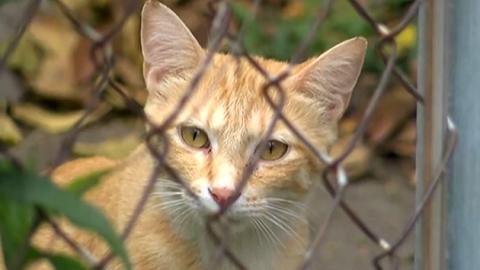 고양이가 핥았더니 '실명'…애묘인 '발칵'