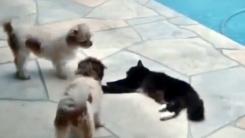 잠자는 고양이를 건드린 강아지의 끔찍한 최후