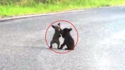 아기곰들의 레슬링 한 판 승부 '귀여워'