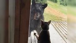 야생 곰을 줄행랑 치게 만든 고양이의 허세