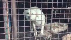 '개 먹이로 개 사체를?' 충격적인 사육장 실태