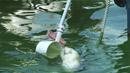 한 달 빠른 한강 녹조…이례적 상류 역류