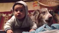 """'얼마나 먹고 싶었으면…' 말문 트인 강아지 """"엄마"""""""