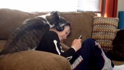 '이래도 안 놀아줄거야?' 고양이의 격한 애정표현