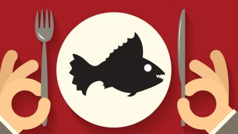 '식인 물고기' 피라니아도 먹을 수 있을까?