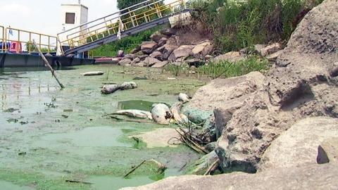 '녹조가 잡아먹은 한강' 하류 전 구간 조류경보